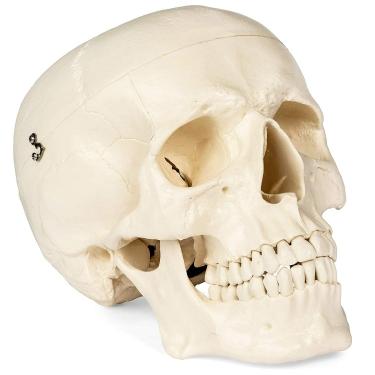 Skulls School Lab