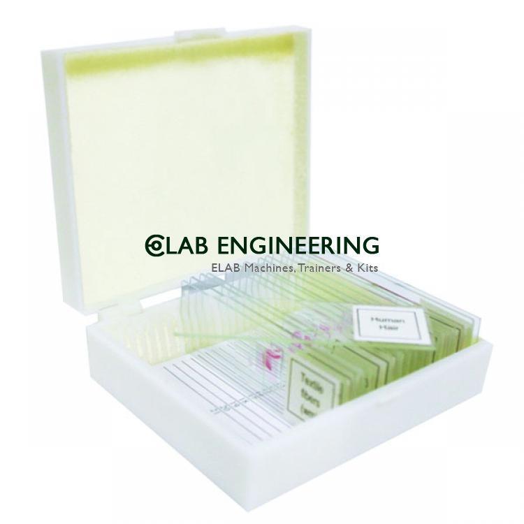 Basic Botany Prepared Slide Set