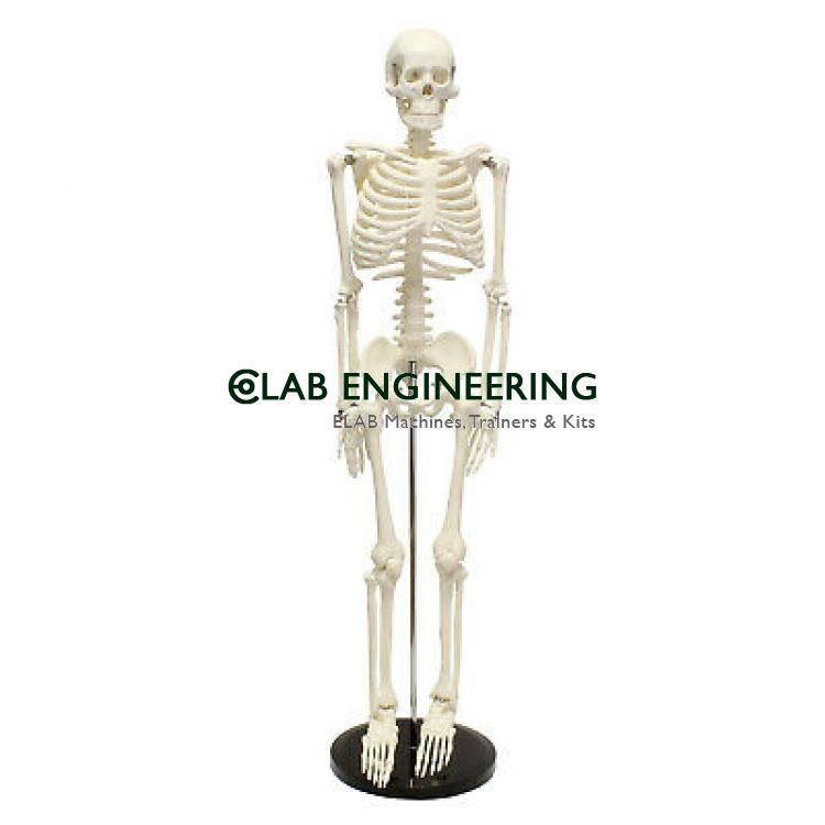 Human Skeleton 66 H Hanging Thick Zip Dust Cover