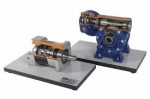 Cutaway Model Worm Gear